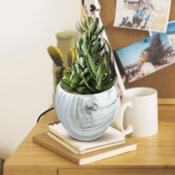 Plantes Grasses Intemporelles avec Pot Effet Marbre